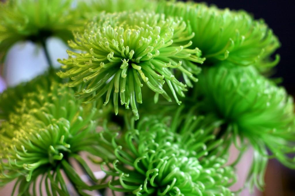 greenflowers1